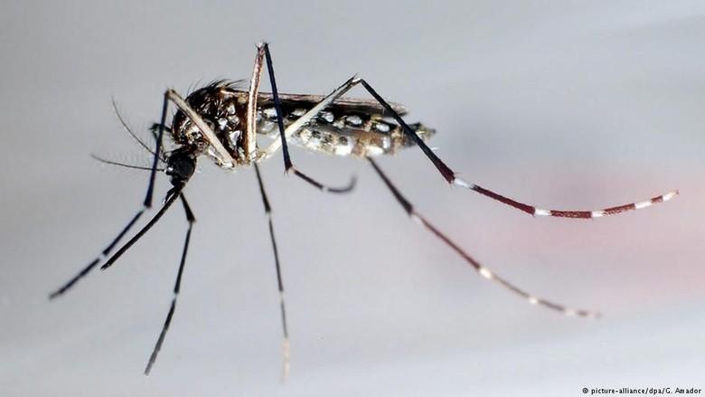 Singapura Gelar Perang Unik Cegah Wabah Demam Berdarah Dengue
