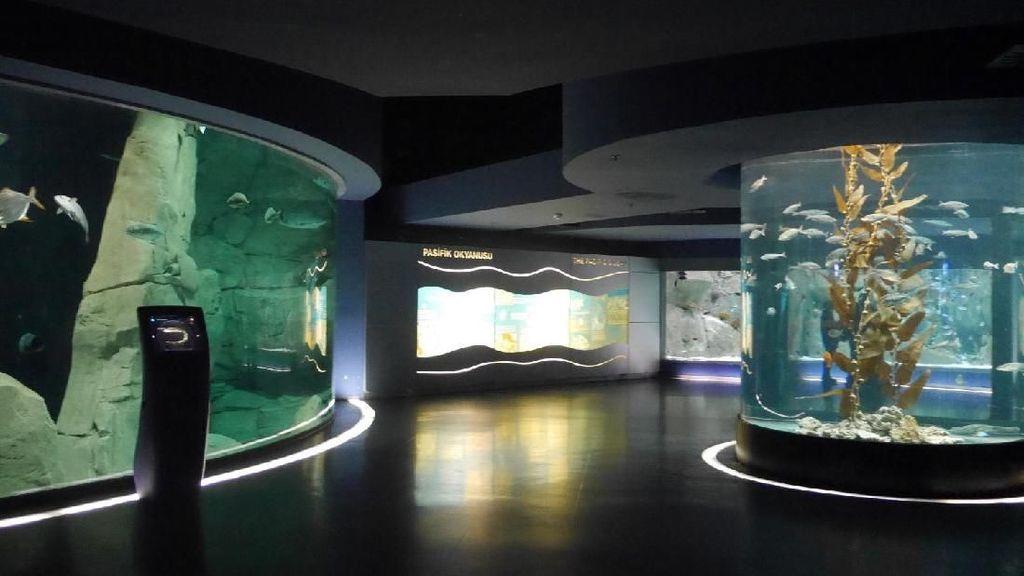 Ini Dia Akuarium Tematik Terbesar di Dunia