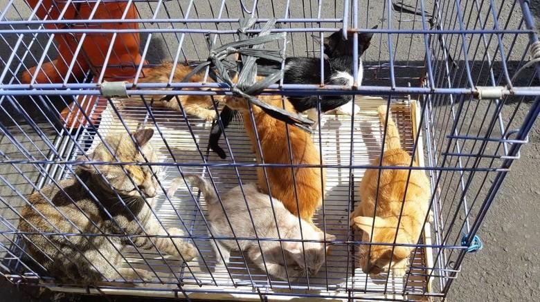 Alasan Kucing Liar di Jakpus Ditangkapi: Berisik saat Kawin