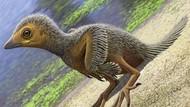 Ilmuwan Temukan Fosil Burung Terkecil yang Hidup 127 Juta Tahun Lalu