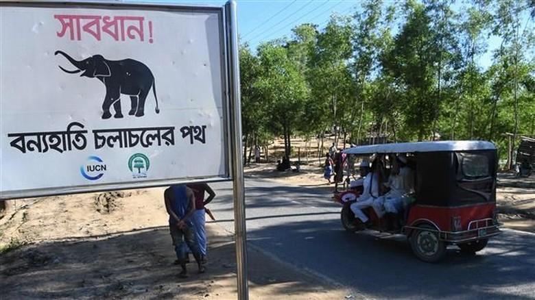 Tragis! 10 Pengungsi Rohingya Tewas Diserang Gajah di Bangladesh