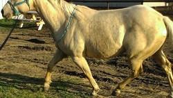 Otot besar dan kekar bukan sesuatu yang hanya dimiliki oleh binaraga saja. Hewan pun bila mendapat stimulasi dan nutrisi yang tepat bisa punya tubuh berotot.