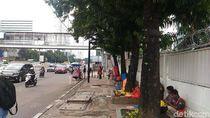 Sebelum Dipindah, 541 Pohon di Sudirman-Thamrin Akan Dipangkas Dulu