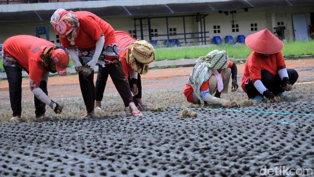 Rumput Mulai Ditanam di Stadion Si Jalak Harupat