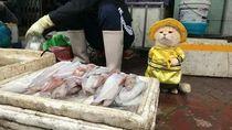 Lucu Banget Sih! Kucing Berkostum Ini Ikut Jualan Ikan di Pasar