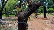 Pohon-pohon dari Sudirman Sudah Ditanam di Taman BMW