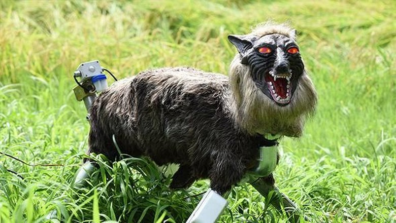 Jepang Pakai 'Serigala Super Monster' untuk Jaga Sawah