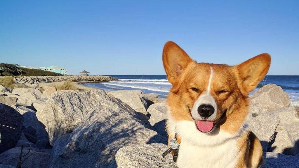 Duh Gemasnya, Saat Hewan Peliharaan Bermain di Pantai