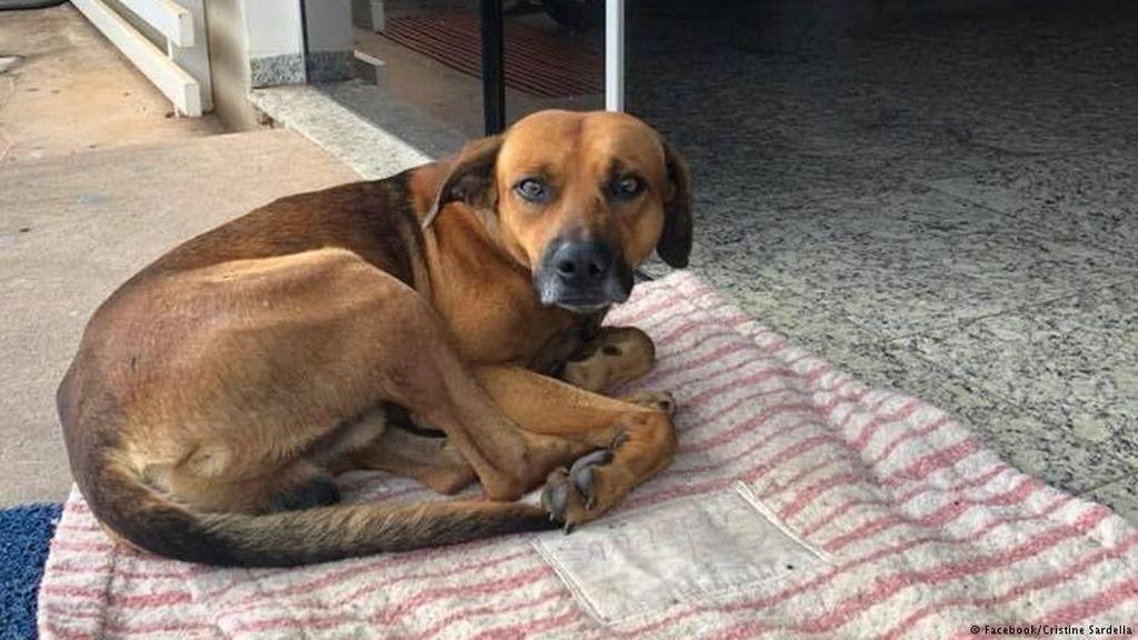 Seekor Anjing Setia Menunggu Majikannya yang Meninggal di Rumah Sakit