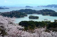 Saat sakura bermekaran di Matsushima (Thinkstock)