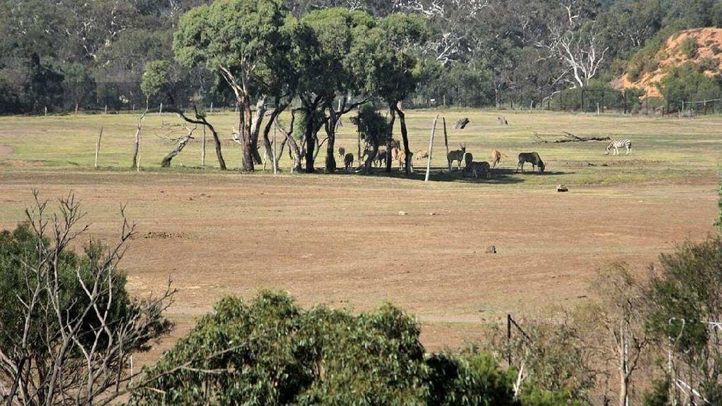 Ini Bedanya Kebun Binatang di Australia dan Indonesia