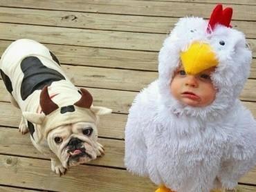 Ayamnya imut banget. (Foto: Instagram/via inspiradposts)