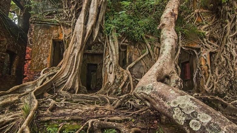 Pulau Ross, pulau terpencil di Samudera Hindia (Neelima Vallangi/BBC travel)