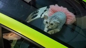 Bikin Gemes, Si Kucing Lambo