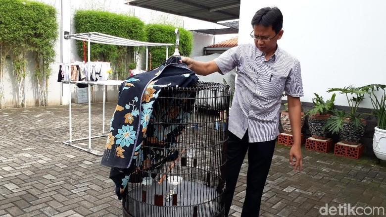 Cerita Dede, Pemilik Burung Murai Batu Tolak Tawaran Jokowi
