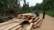 Illegal Logging di Sumsel, KLHK: Dilakukan Bos Besar