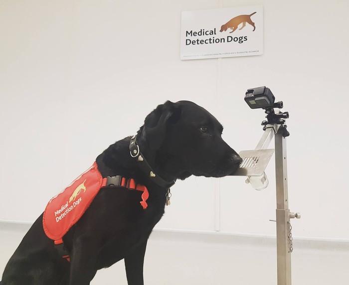 Kim sedang mendeteksi sampel malaria. (Foto: Facebook/Medical Detection Dogs)
