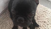 Deretan Kisah Malang Anjing di Pesawat: Mati hingga Nyasar Jauh