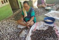Jagung Terenak di Indonesia Hanya Ada di Serambi Madinah