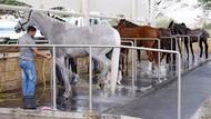 Cuma di Qatar, Resor Bintang 5 Khusus Kuda