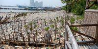 Lautan sampah di Teluk Jakarta, Muara Angke, Jakarta Utara