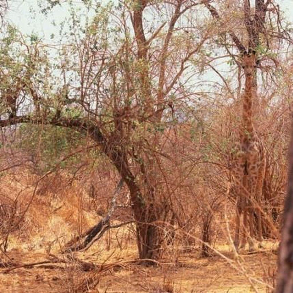 Test Kejelian Mata dengan Menemukan Hewan yang Berkamuflase
