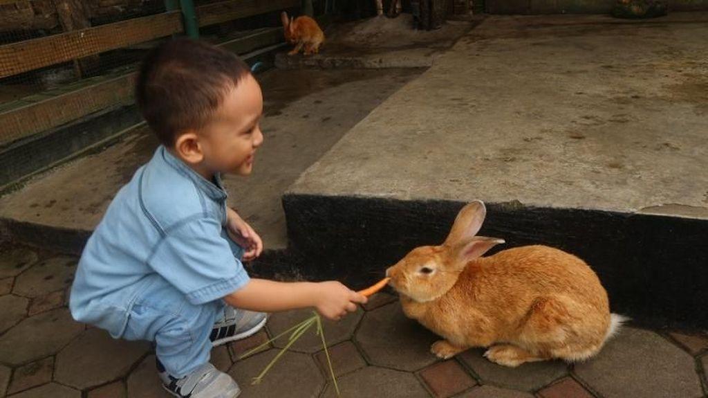 Yuk, Bermain Bersama Hewan Lucu di Farmhouse Bandung