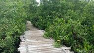 Di Balik Tumpukan Sampah, Ada Kawasan Mangrove Cantik di Muara Angke