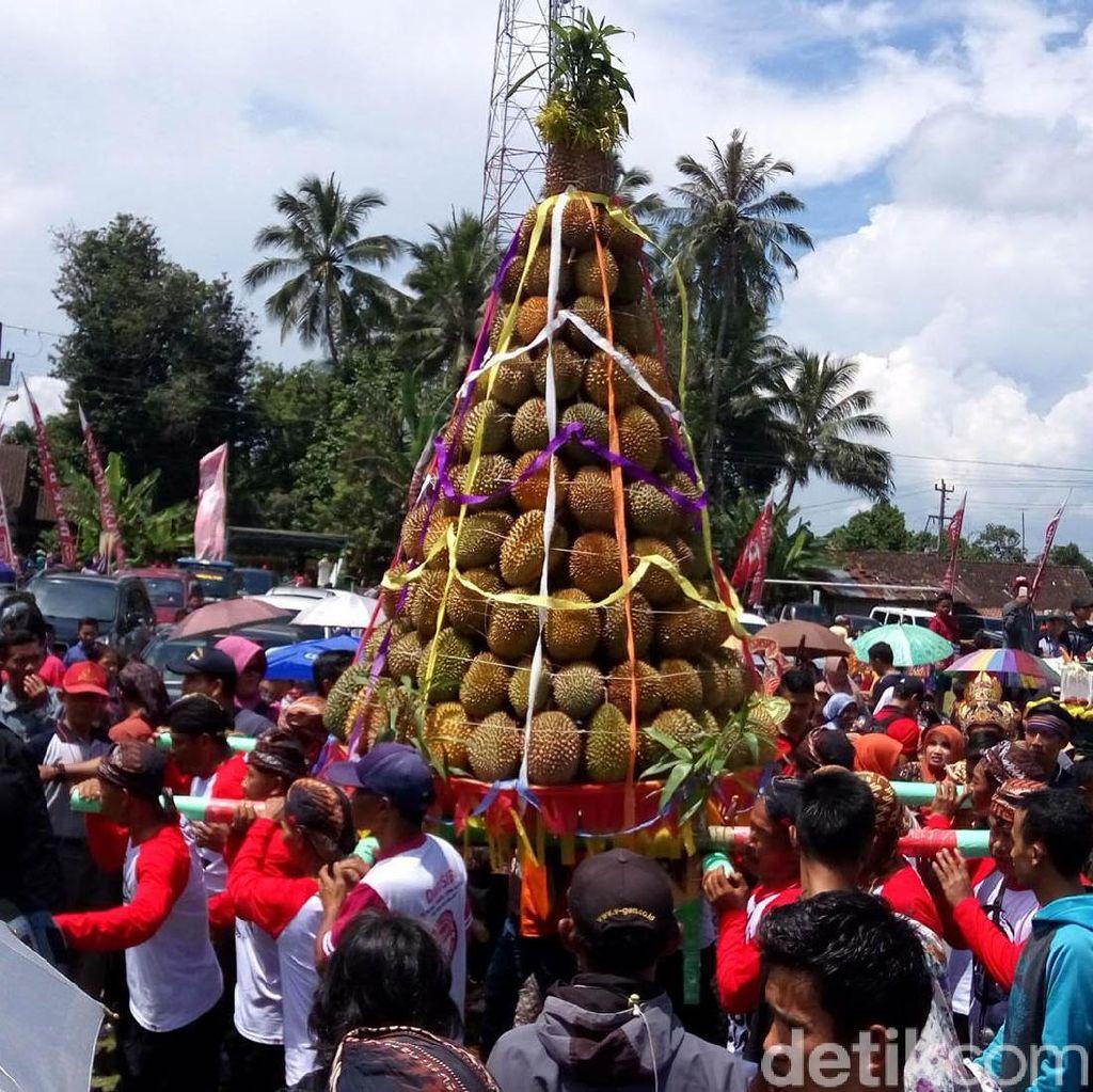 Panen Melimpah, Warga Candimulyo Magelang Gelar Festival Durian