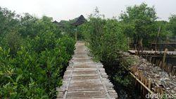 Cerita Sampah yang Jadi Fondasi Hutan Mangrove Teluk Jakarta