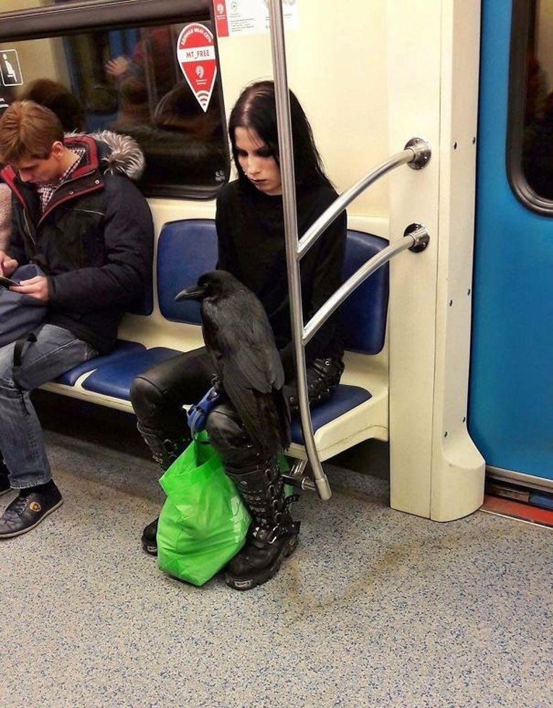 Serba hitam membawa gagak. Foto: Imgur