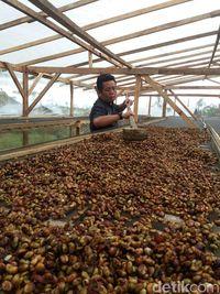 Dibina Komunitas Kopi, 7 <i>Brand</i> Kopi Premium Bengkulu Siap Bersaing di Pasaran