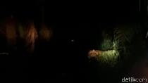 Usai Ditembak Bius, Harimau Bonita Santap Kambing