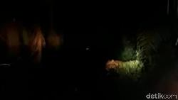 Lacak Lokasi Harimau Bonita, Tim Umpankan Kambing