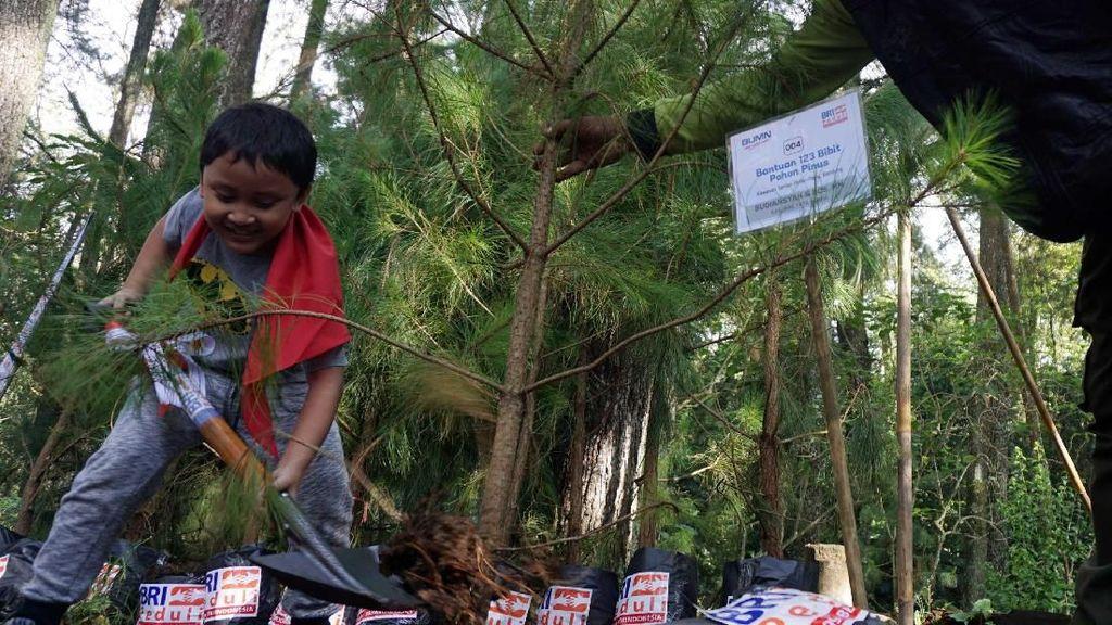 Peduli Lingkungan, BRI Tanam 123 Pohon Pinus