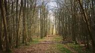 Kisah Horor Hutan yang Menjerit