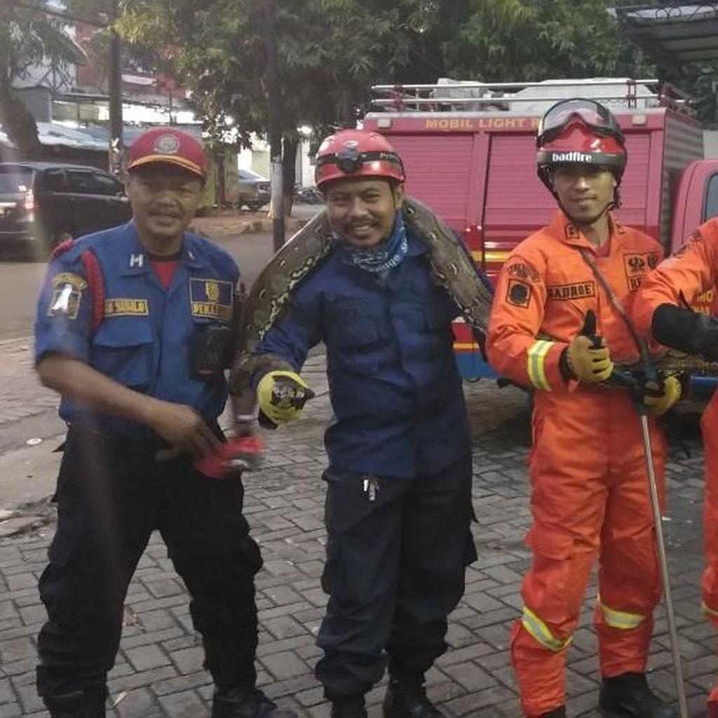 Serangan Ular Sanca di Warung Padang yang Bikin Geger