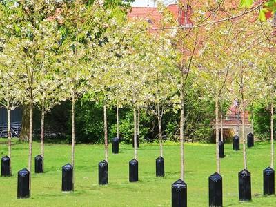 Foto: Pohon yang Bisa Bernyanyi