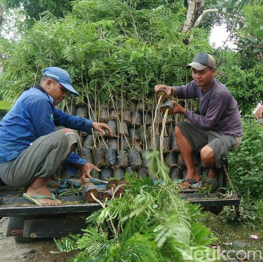 Melihat Sentra Bibit Berbagai Tanaman di Purworejo
