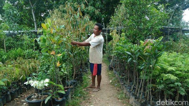 Sentra bibit tanaman di Purworejo.