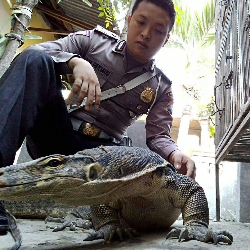 Hobi Nyeleneh Brigadir Arifian, Pelihara Biawak