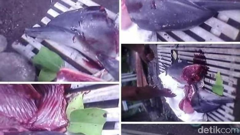 Polisi: Pelaku Sembelih Lumba-lumba yang Sudah Mati