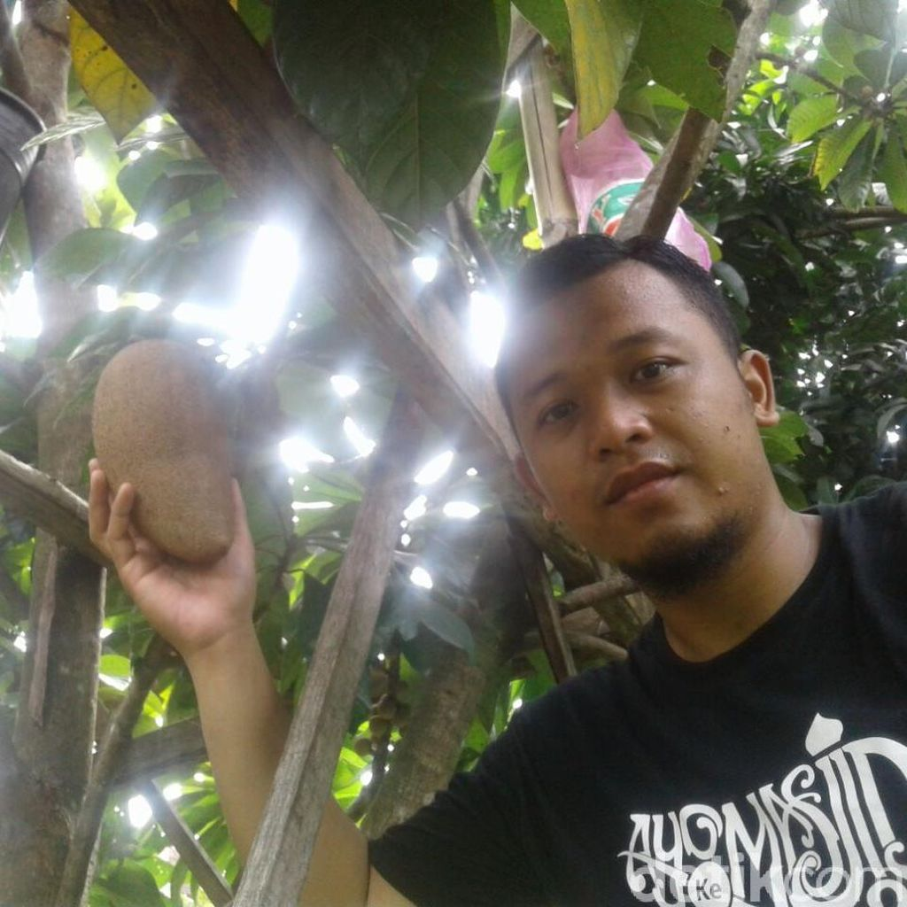 Hebat! Warga Ponorogo Sukses Kembangkan Sawo Berukuran Jumbo