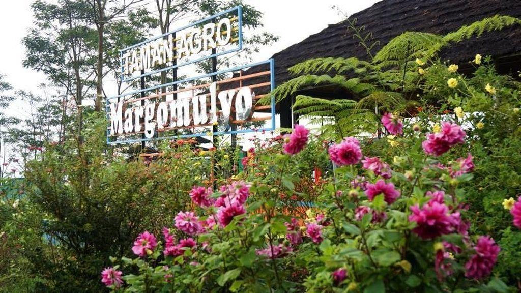 Wow, Kediri Punya Kebun Bunga Secantik Ini