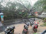 Pohon Tumbang Tutup Jalan Nasional Ciamis-Banjar
