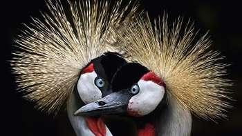 Terhipnotis Foto Burung yang Begitu Memukau