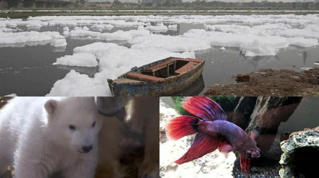 Riuh Dunia dalam Gambar: Bom Kabul Hingga Ikan Cupang Sekarat