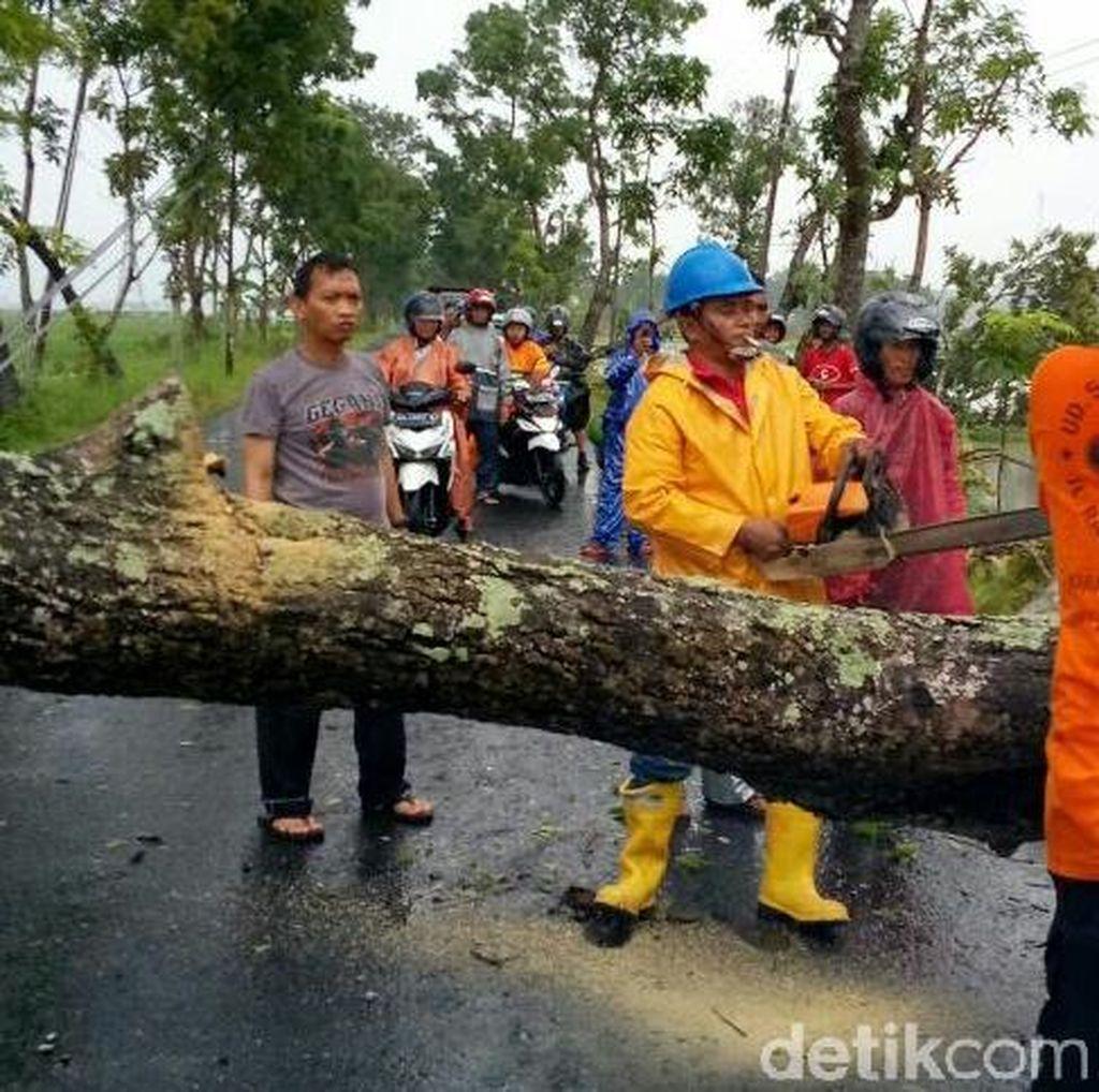 Hujan Deras dan Angin Kencang, Belasan Pohon di Kebumen Tumbang