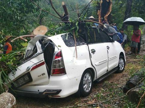 Pohon tumbang di saat hujan disertai angin kencang
