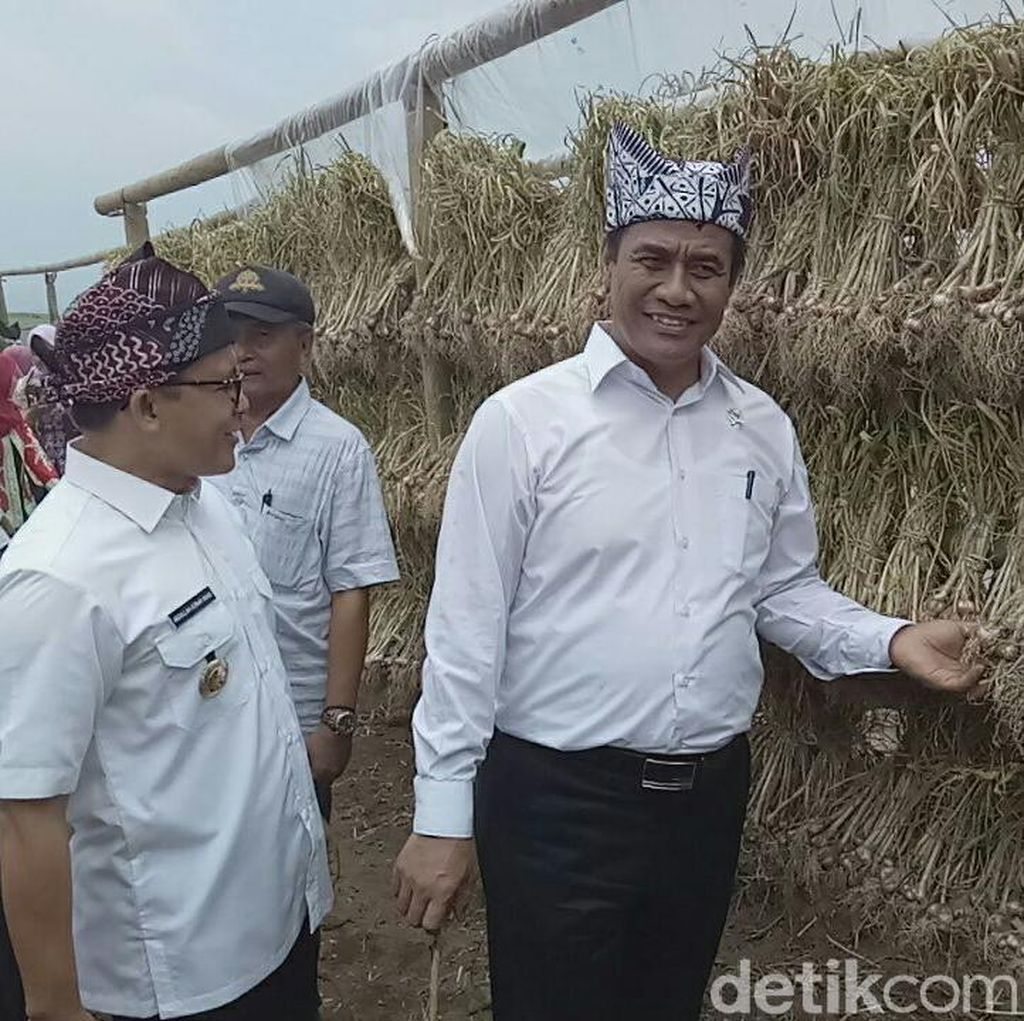 Panen Perdana, Mentan Puji Bawang Putih Banyuwangi